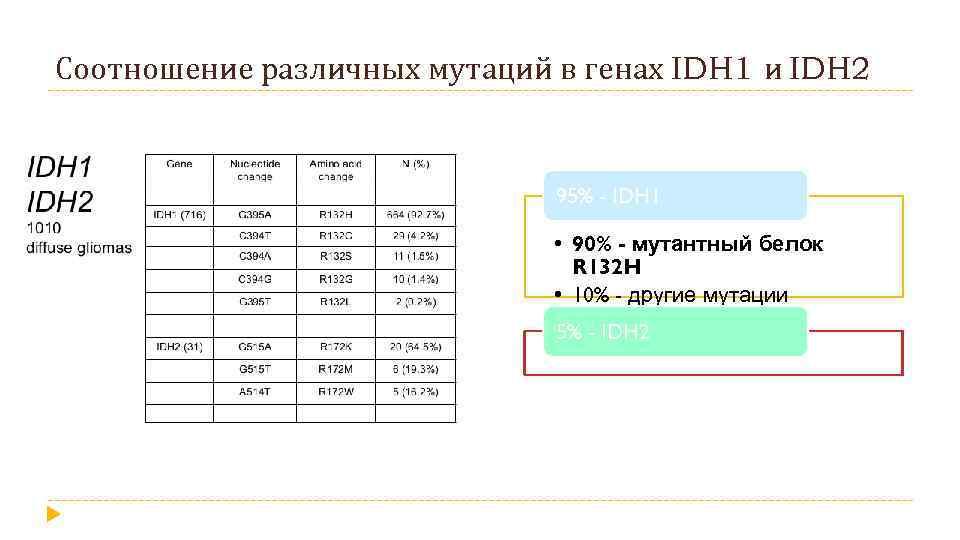Соотношение различных мутаций в генах IDH 1 и IDH 2 95% - IDH 1