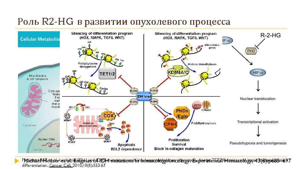 Роль R 2 -HG в развитии опухолевого процесса Figueroa ME et al. Leukemic IDH