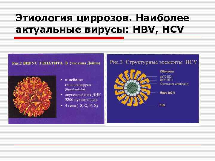 Этиология циррозов. Наиболее актуальные вирусы: HBV, HCV