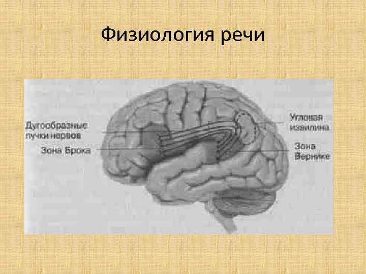 Физиология речи