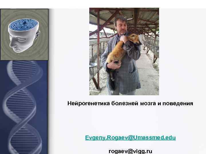 Нейрогенетика болезней мозга и поведения Evgeny. Rogaev@Umassmed. edu rogaev@vigg. ru