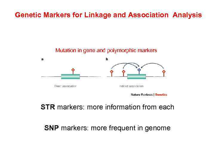 Genetic Markers for Linkage and Association Analysis Mutation in gene and polymorphic markers