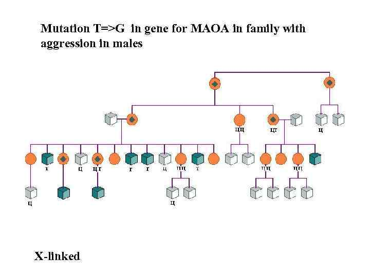 Mutation T=>G in gene for МАОА in family with aggression in males Х-linked