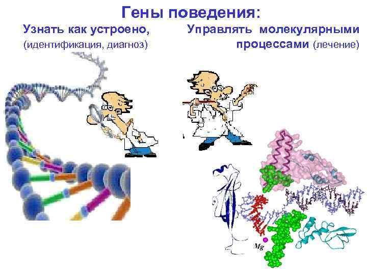 Гены поведения: Узнать как устроено, Управлять молекулярными (идентификация, диагноз) процессами (лечение)