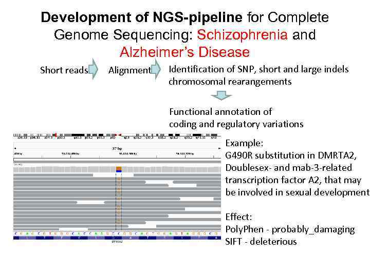 Development of NGS-pipeline for Complete Genome Sequencing: Schizophrenia and Alzheimer's Disease Short reads Alignment