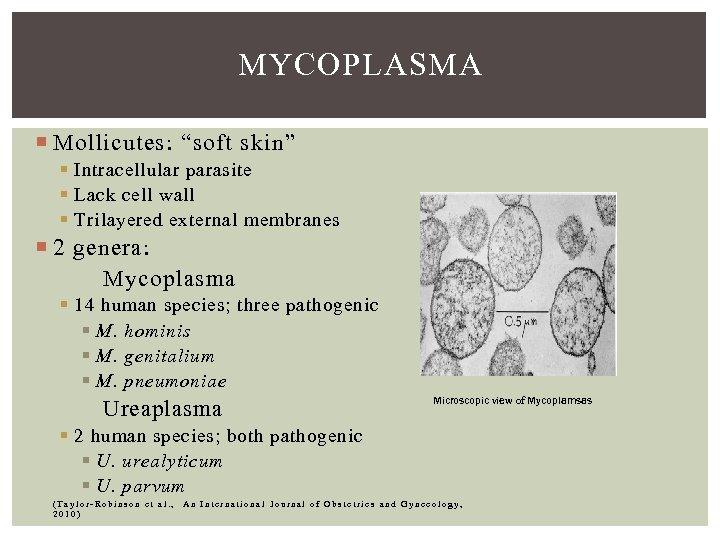 "MYCOPLASMA Mollicutes: ""soft skin"" § Intracellular parasite § Lack cell wall § Trilayered external"