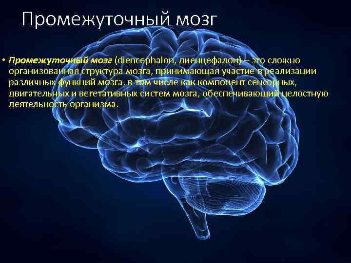 Промежуточный мозг • Промежуточный мозг (diencephalon, диенцефалон) – это сложно организованная структура мозга, принимающая