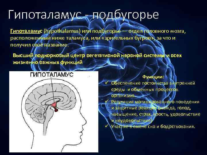Гипоталамус - подбугорье Гипоталамус (hypothalamus) или подбугорье — отдел головного мозга, расположенный ниже таламуса,