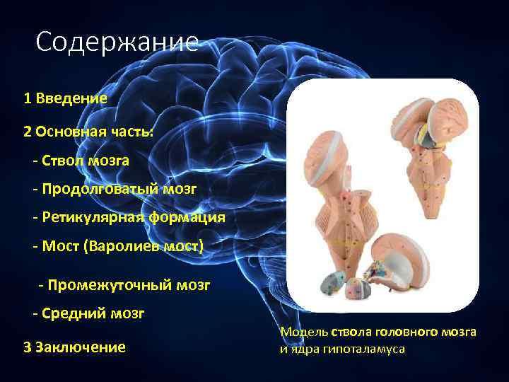 Содержание 1 Введение 2 Основная часть: - Ствол мозга - Продолговатый мозг - Ретикулярная