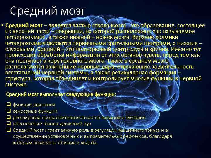 Средний мозг • Средний мозг – является частью ствола мозга - это образование, состоящее