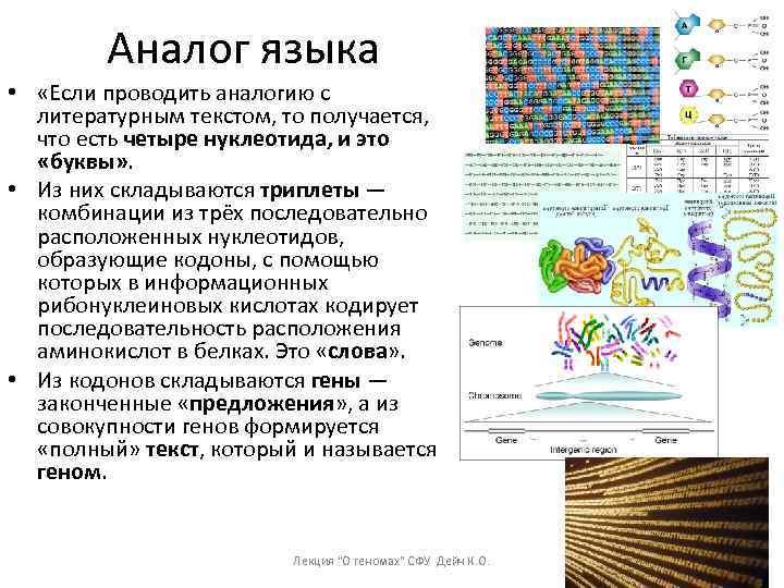 Аналог языка • «Если проводить аналогию с литературным текстом, то получается, что есть четыре