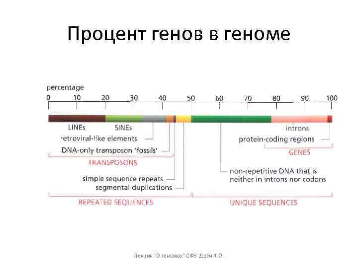 Процент генов в геноме Лекция