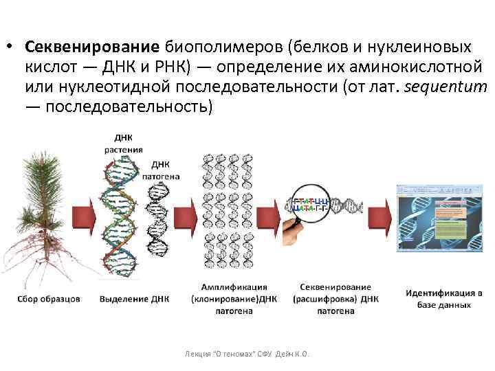 • Секвенирование биополимеров (белков и нуклеиновых кислот — ДНК и РНК) — определение