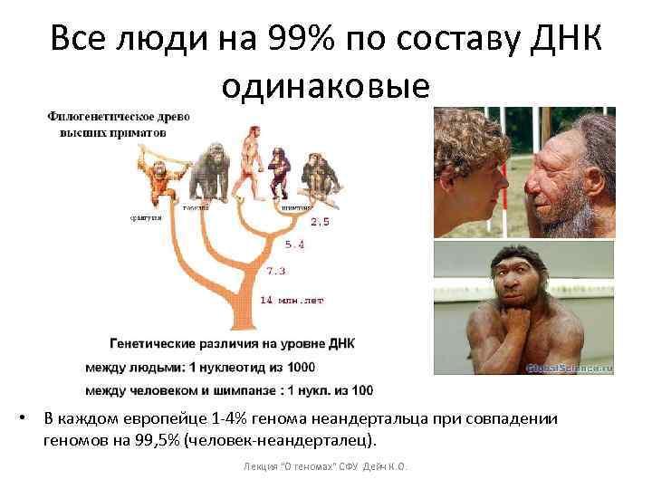 Все люди на 99% по составу ДНК одинаковые • В каждом европейце 1 -4%