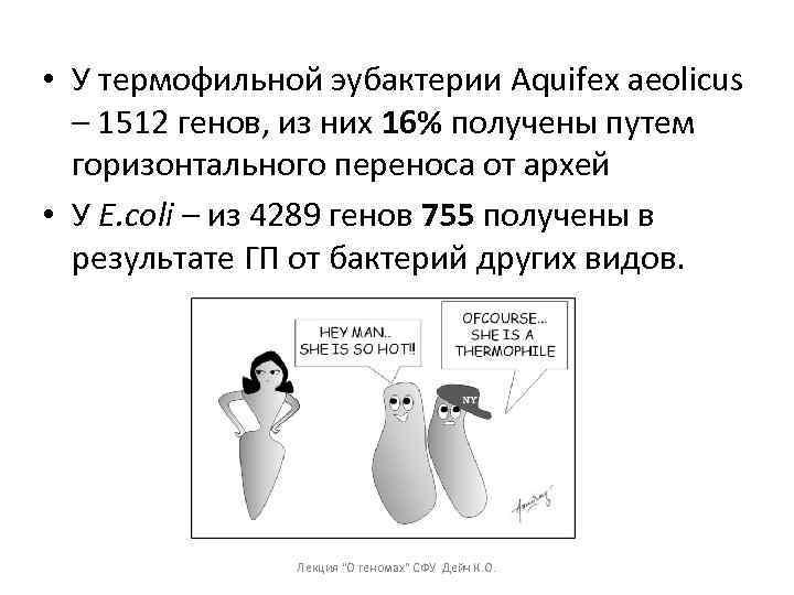 • У термофильной эубактерии Aquifex aeolicus – 1512 генов, из них 16% получены
