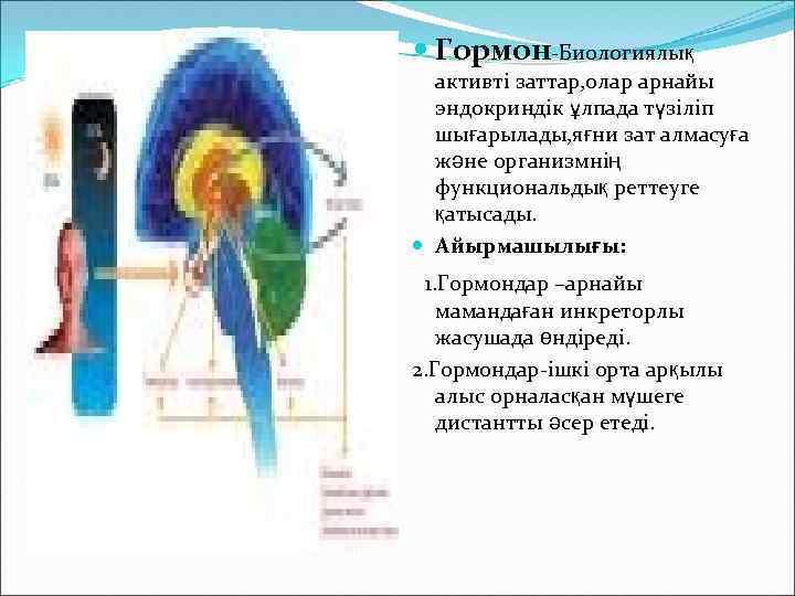 Гормон-Биологиялық активті заттар, олар арнайы эндокриндік ұлпада түзіліп шығарылады, яғни зат алмасуға және