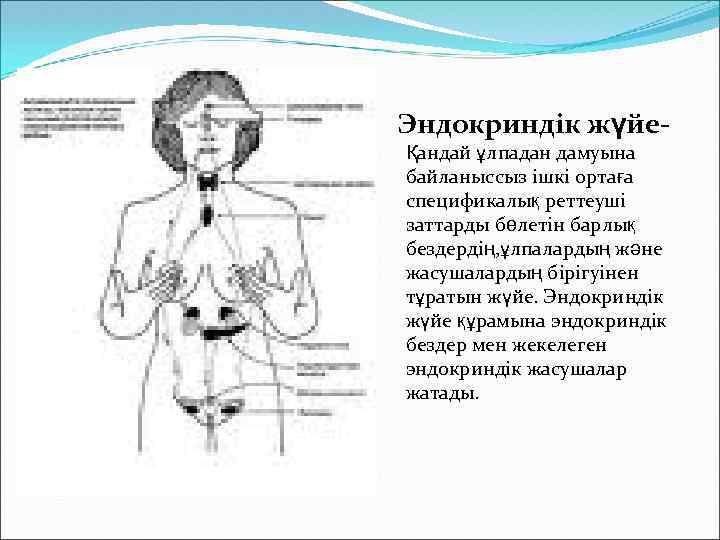 Эндокриндік жүйеҚандай ұлпадан дамуына байланыссыз ішкі ортаға спецификалық реттеуші заттарды бөлетін барлық бездердің, ұлпалардың