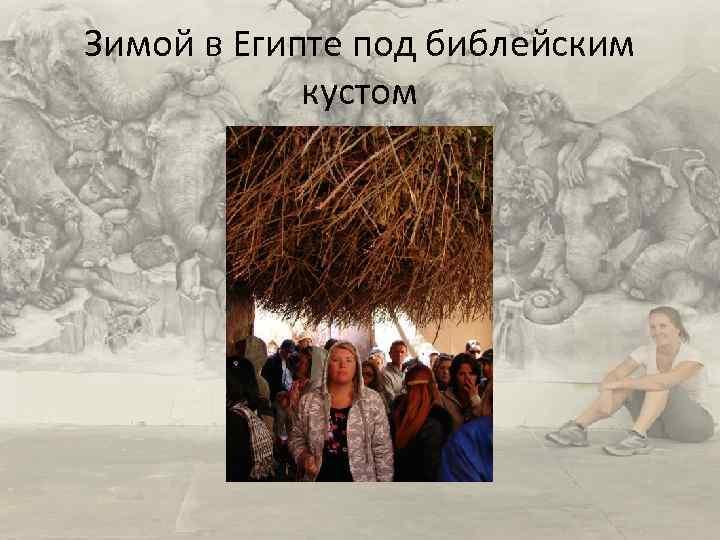 Зимой в Египте под библейским кустом