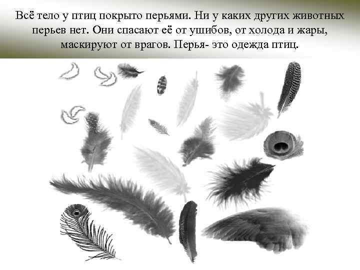 Всё тело у птиц покрыто перьями. Ни у каких других животных перьев нет. Они
