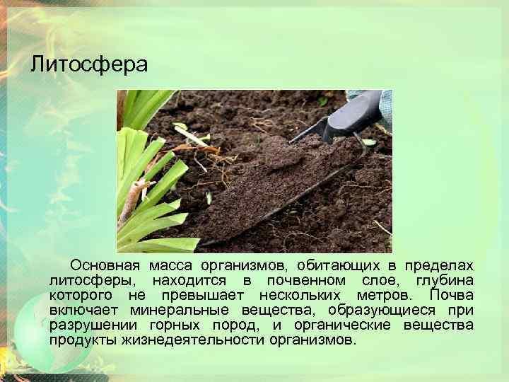 Литосфера Основная масса организмов, обитающих в пределах литосферы, находится в почвенном слое, глубина которого
