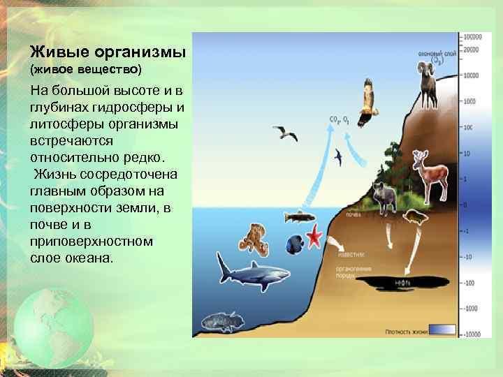 Живые организмы (живое вещество) На большой высоте и в глубинах гидросферы и литосферы организмы