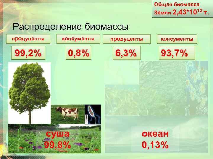 Общая биомасса Земли 2, 43*1012 т. Распределение биомассы продуценты консументы продуценты 99, 2% 0,