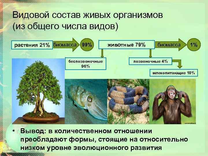 Видовой состав живых организмов (из общего числа видов) растения 21% биомасса 99% беспозвоночные 96%