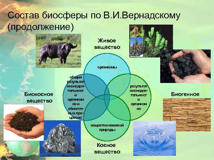 Состав биосферы по В. И. Вернадскому (продолжение) Живое вещество организмы Биокосное вещество общий результат