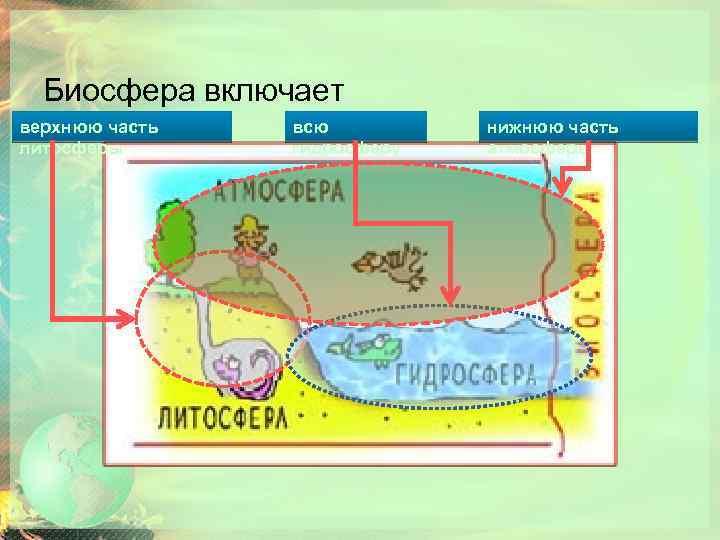 Биосфера включает верхнюю часть литосферы всю гидросферу нижнюю часть атмосферы