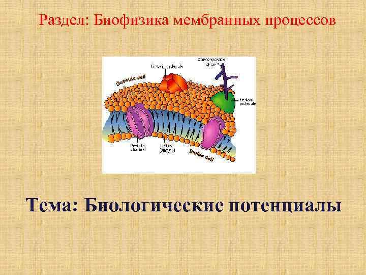 Раздел: Биофизика мембранных процессов Тема: Биологические потенциалы