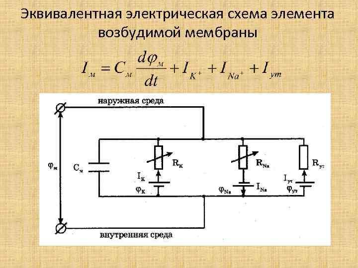 Эквивалентная электрическая схема элемента возбудимой мембраны