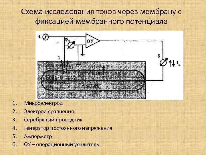 Схема исследования токов через мембрану с фиксацией мембранного потенциала 1. 2. 3. 4. 5.