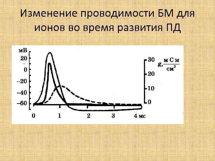 Изменение проводимости БМ для ионов во время развития ПД