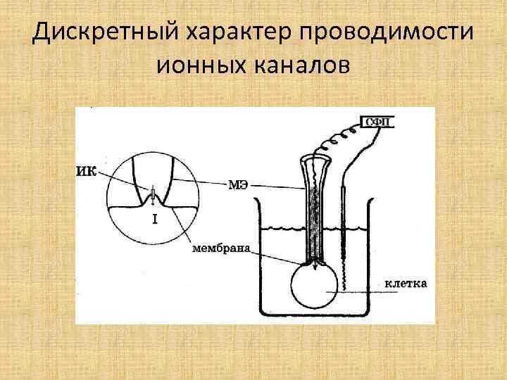 Дискретный характер проводимости ионных каналов