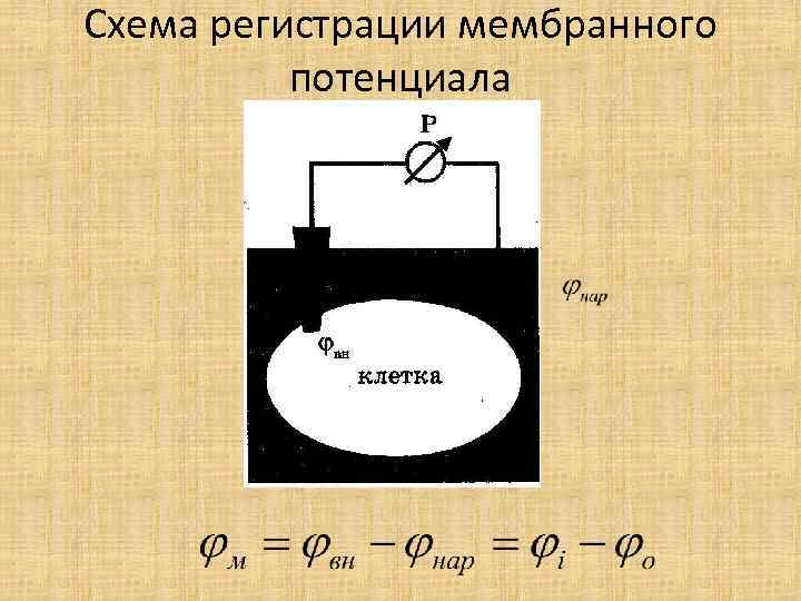 Схема регистрации мембранного потенциала