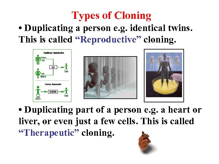 Types of Cloning • Duplicating a person e. g. identical twins. This is called