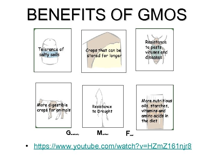 BENEFITS OF GMOS G enetically M odified F ood • https: //www. youtube. com/watch?
