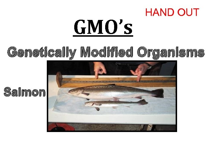 GMO's HAND OUT Genetically Modified Organisms Salmon