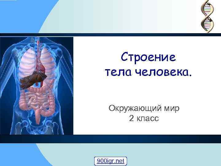 Строение тела человека. Окружающий мир 2 класс 900 igr. net