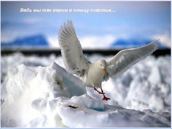 Ведь мы так верим в птицу счастья. .