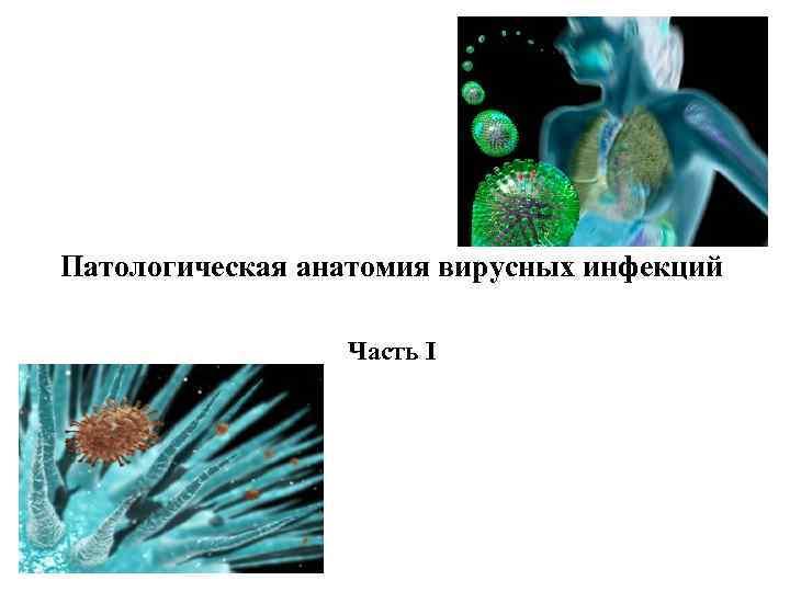 Патологическая анатомия вирусных инфекций Часть I