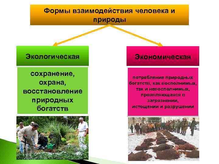 Формы взаимодействия человека и природы Экологическая Экономическая сохранение, охрана, восстановление природных богатств потребление природных