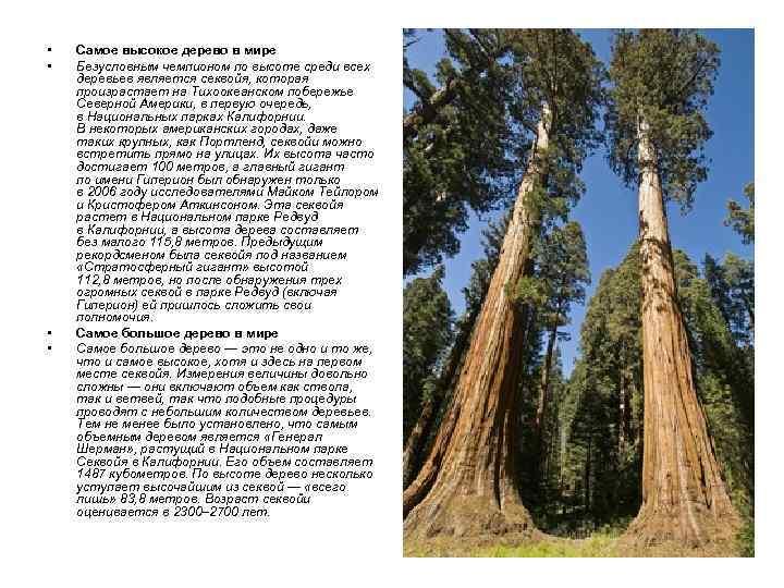 • • Самое высокое дерево в мире Безусловным чемпионом по высоте среди всех