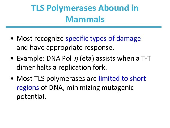 TLS Polymerases Abound in Mammals • Most recognize specific types of damage and have