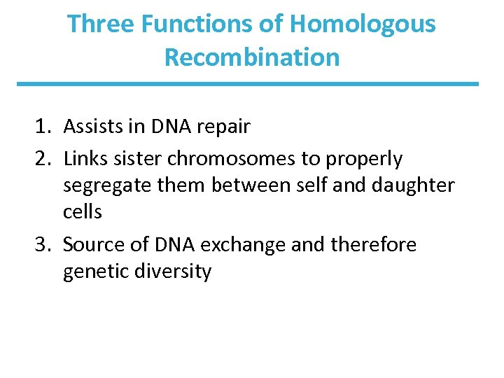 Three Functions of Homologous Recombination 1. Assists in DNA repair 2. Links sister chromosomes