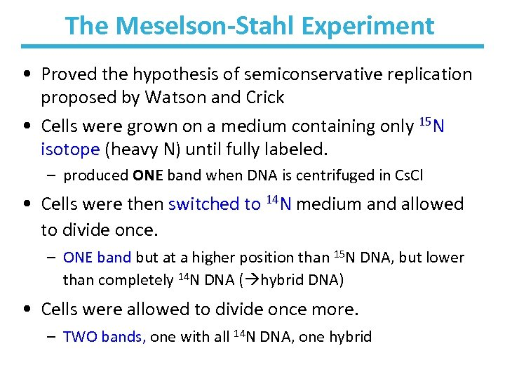The Meselson-Stahl Experiment • Proved the hypothesis of semiconservative replication proposed by Watson and