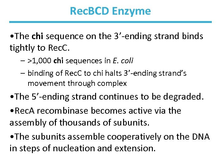 Rec. BCD Enzyme • The chi sequence on the 3'-ending strand binds tightly to