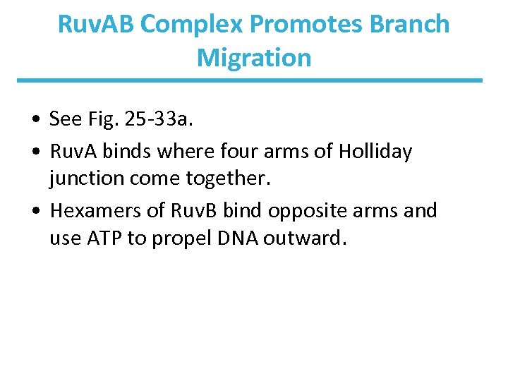 Ruv. AB Complex Promotes Branch Migration • See Fig. 25 -33 a. • Ruv.