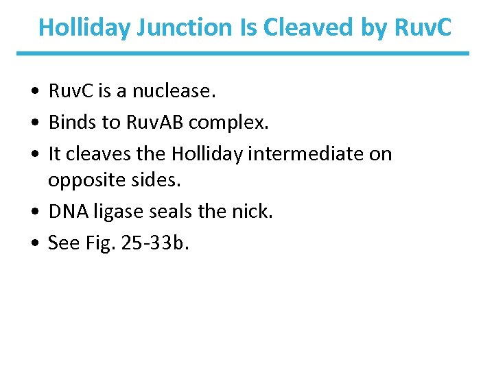 Holliday Junction Is Cleaved by Ruv. C • Ruv. C is a nuclease. •
