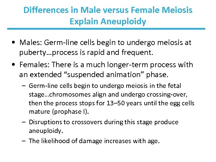 Differences in Male versus Female Meiosis Explain Aneuploidy • Males: Germ-line cells begin to